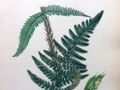 16th October 2018. Sowerby Fern Prints